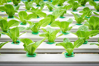 hydroponics water quality
